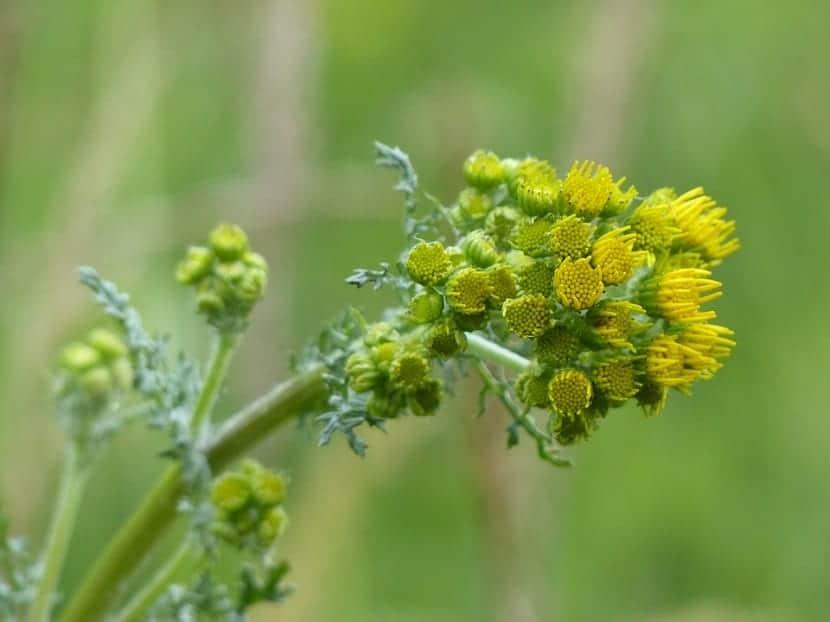 rama de arbusto con pequeñas flores de color amarillo