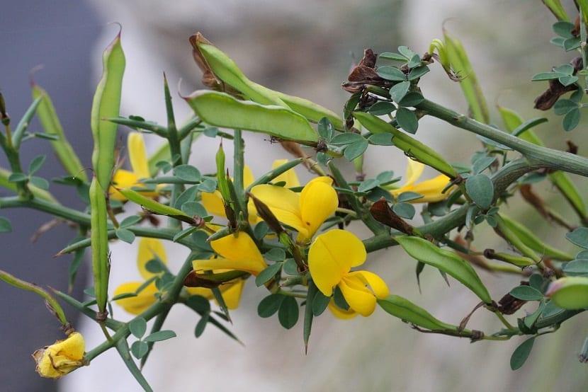 rama de arbustos con flores amarillas