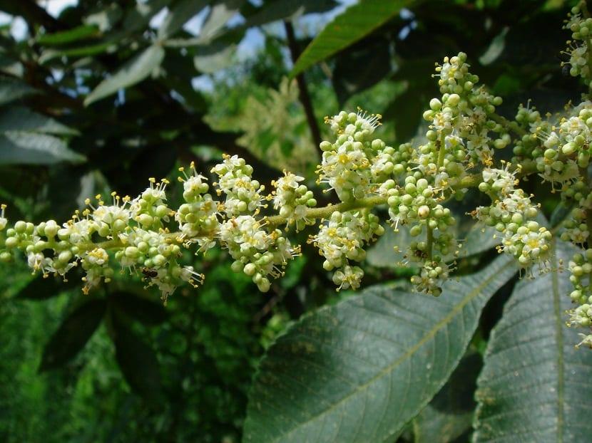 rama llena de flores apunto de florecer