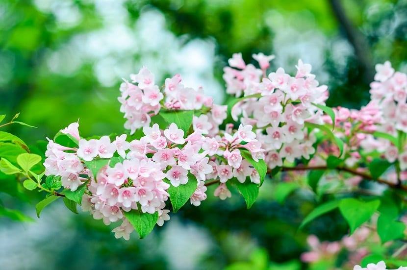 rama llena de pequenas flores de color rosa