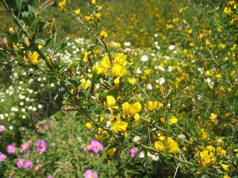 ramas de arbustos en medio del campo con flores amarillas