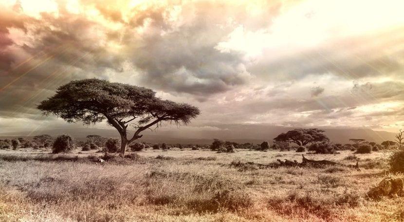 Vista de la sabana africana.