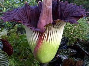 Flor enorme