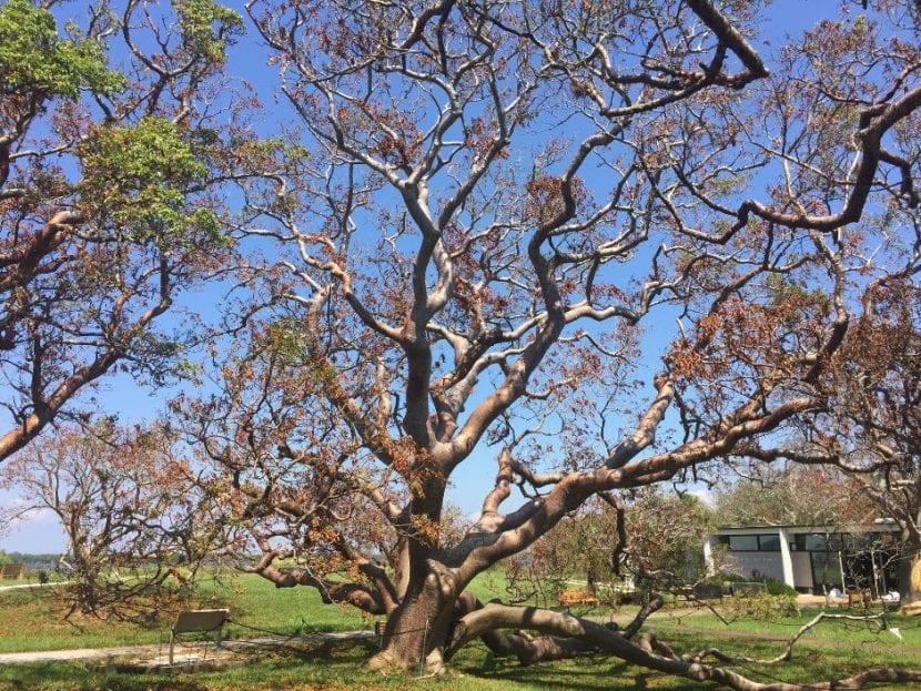 Hay árboles que crecen muchos metros