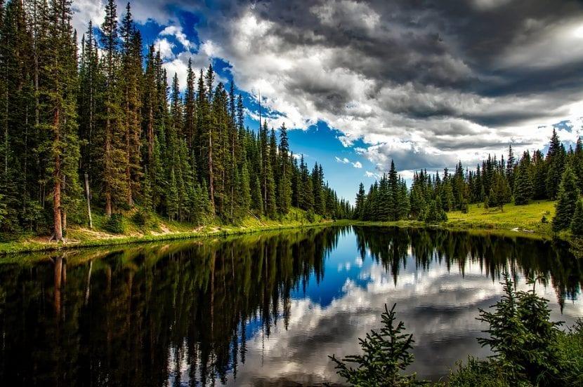 Hay más de 60 mil especies de árboles en el mundo