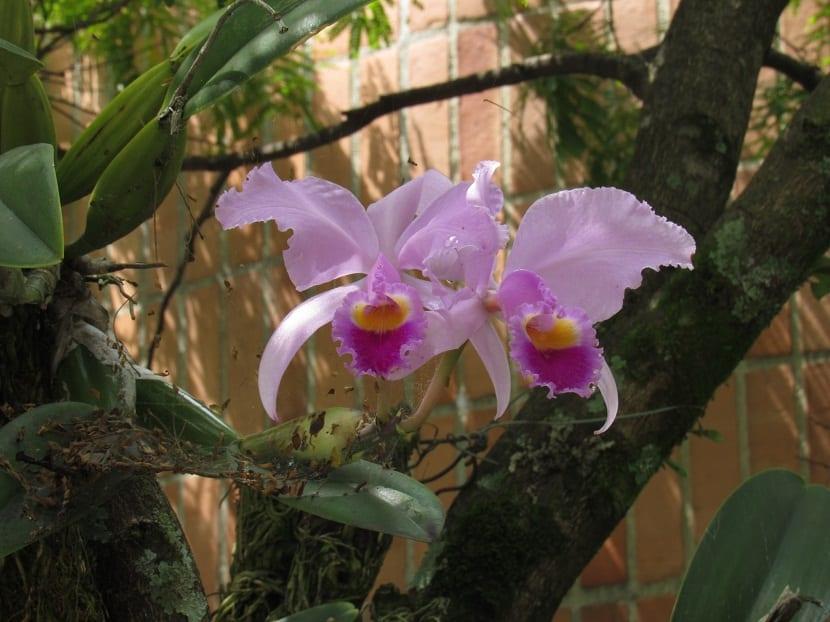 dos orquideas que aparecen de un gran tronco