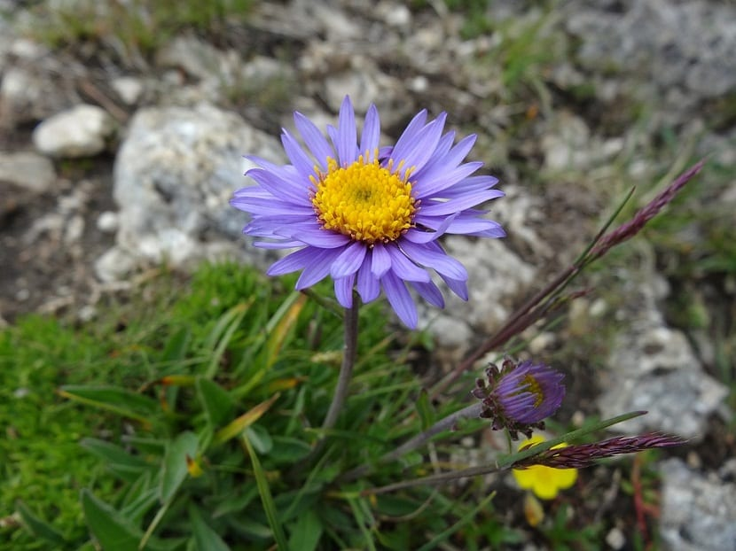 flor de un color morado vivo que crece entre arbustos