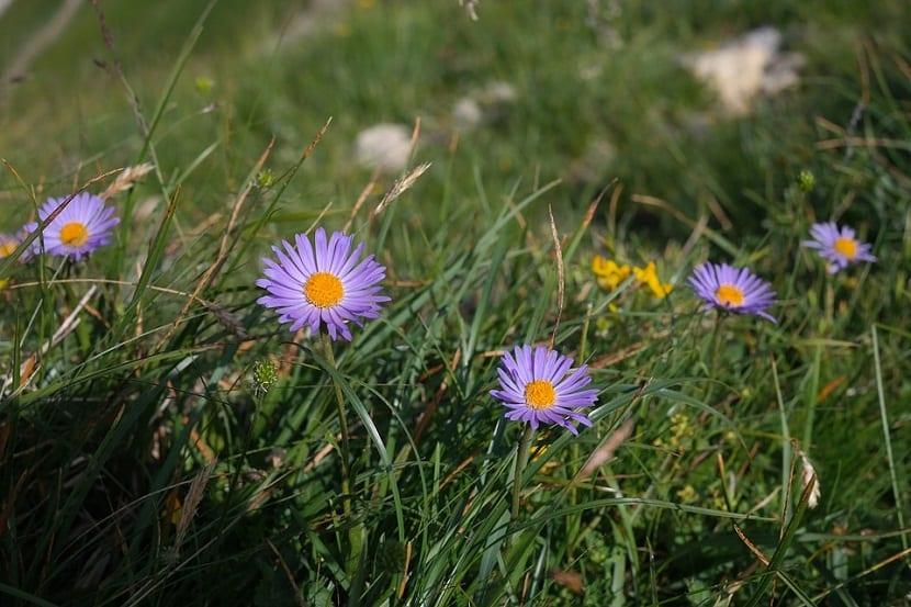 flores de colores vivos que crecen en un jardin