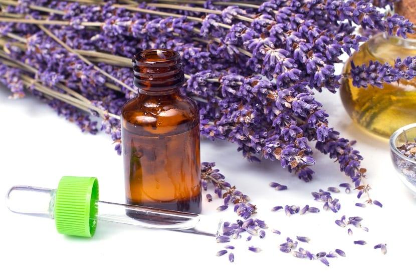 flores secas para uso medicinal