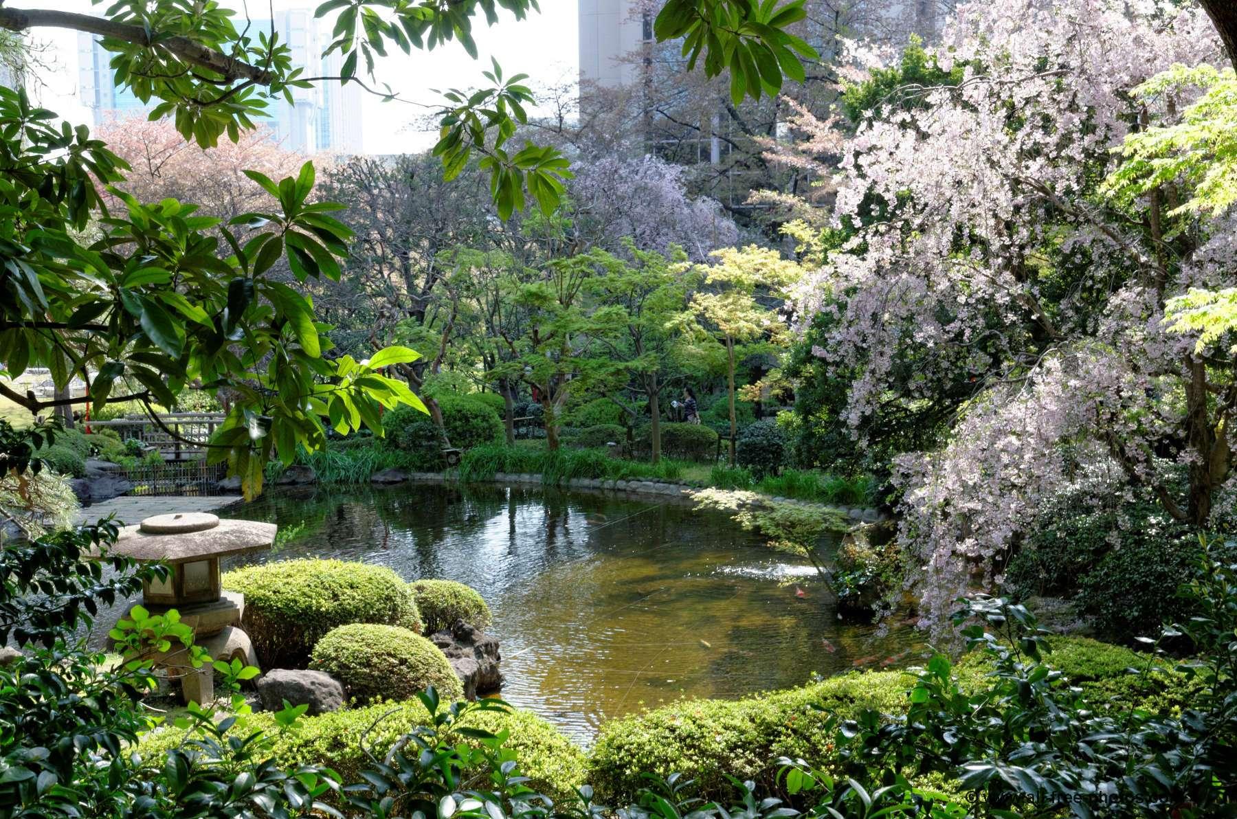 Vista de un jardín