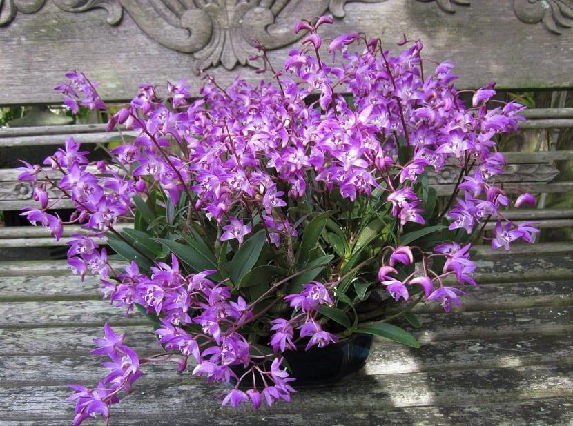 maceta con flores tipo orquideas de color lila