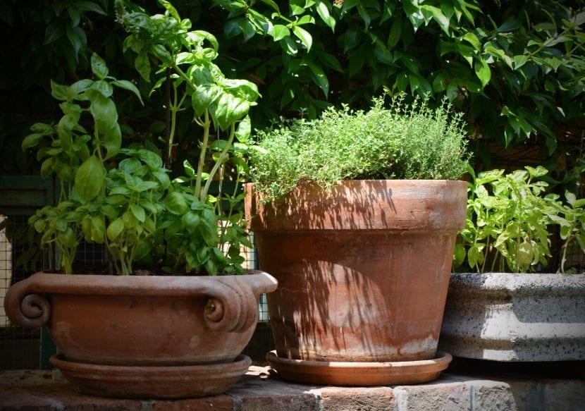 Las macetas de barro son geniales para las plantas