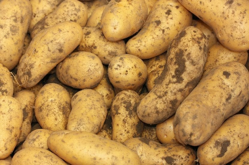 Las patatas son comestibles