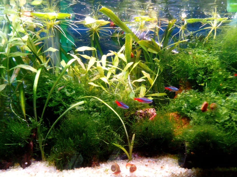 peces dentro de un acuario con algas