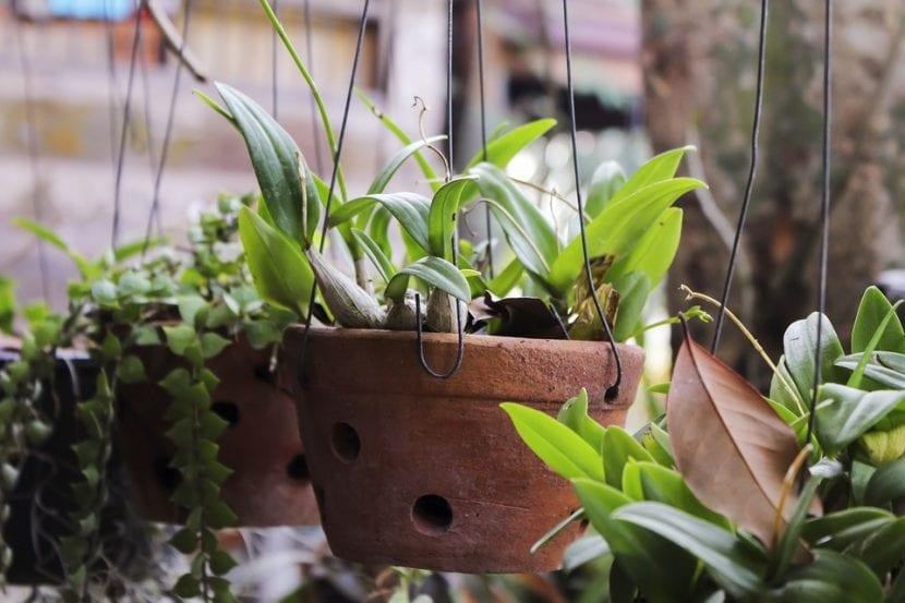 Vista de las plantas en maceta