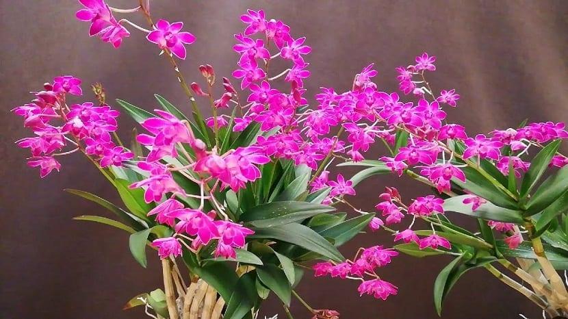 varias ramas con pequeñas flores de color rosa
