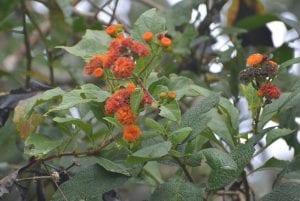 Beneficios de planta medicinal