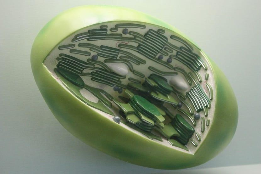 Representación de célula vegetal