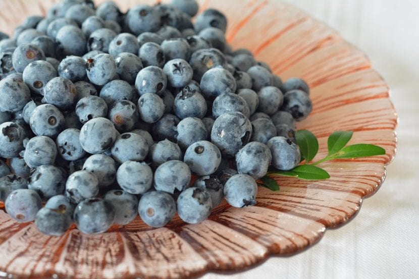 Los arándanos azules son bayas comestibles