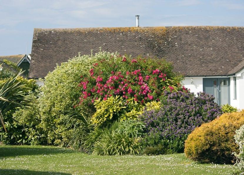 Vista de arbustos en un jardín