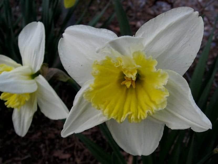 flor blanca ampliada de gran tamano