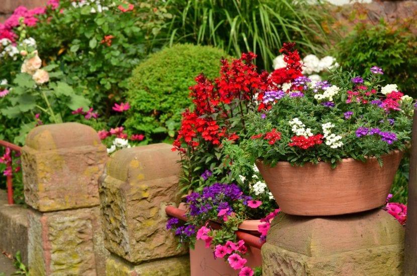 Evita comprar plantas enfermas
