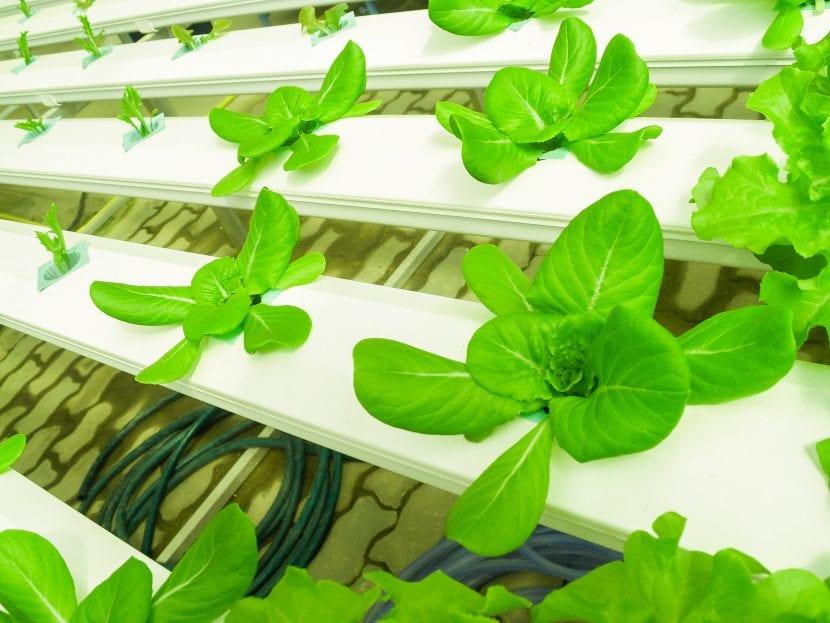 La hidroponía es un sistema de cultivo