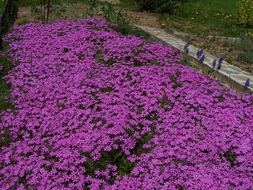 manto o alfombra de flores con colores vivos