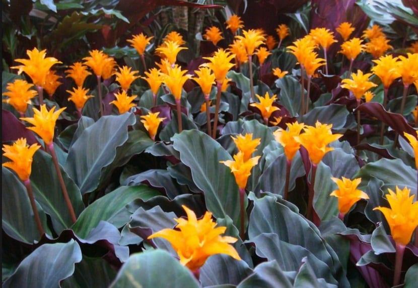 macetas con planta con hojas y flores de color naranja