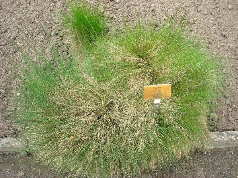 arbusto con cartel que pone el nombre de la planta