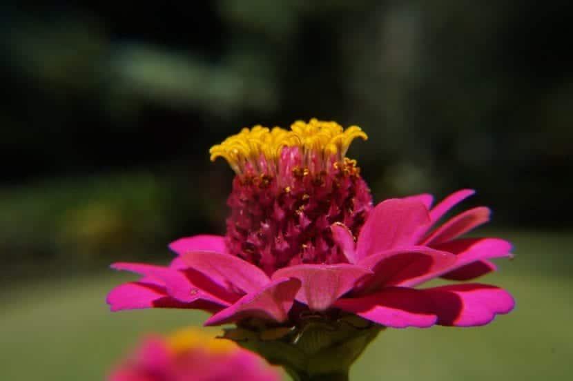 La botánica es una ciencia apasionante