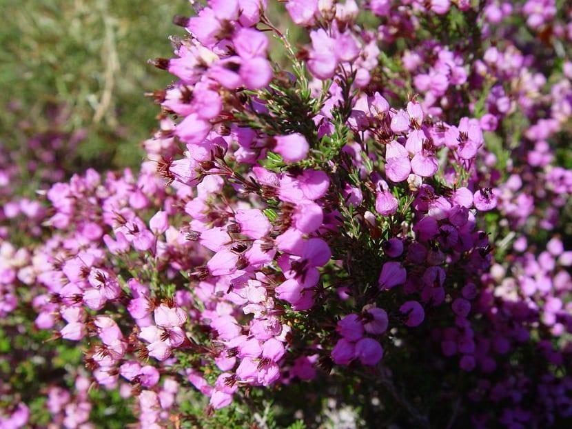 flores de pequeno tamano a punto de abrirse