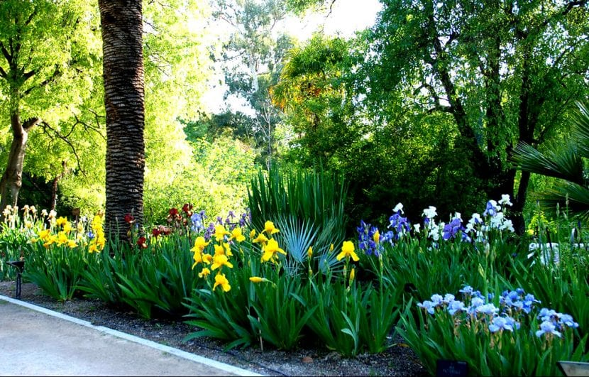 Vista del Real Jardín Botánico de Madrid