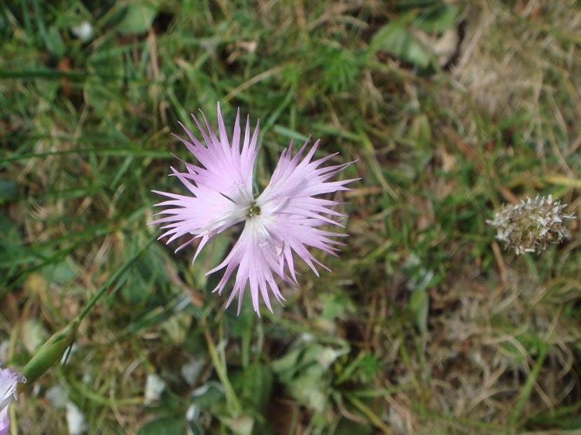 preciosa flor con petalos muy finos