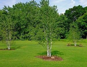 arbol de tamano pequeno recien plantado