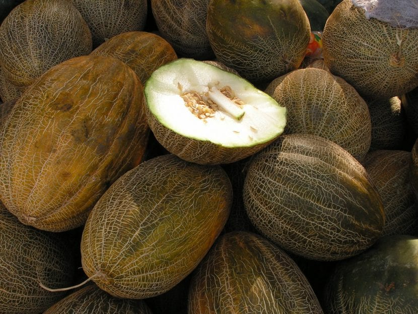 El melón piel de sapo es una planta
