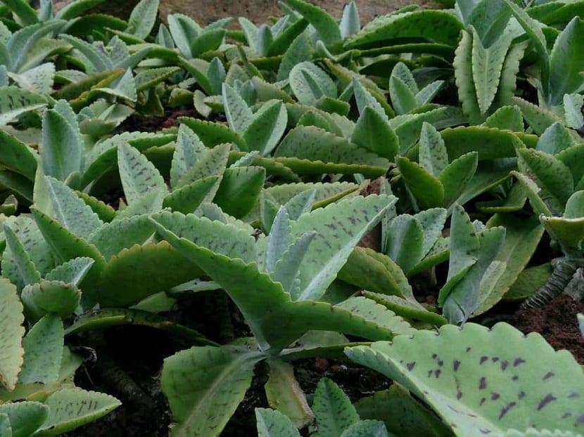 plantas de tamano pequeno plantadas todas juntas en la tierra