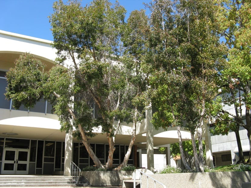 arboles plantados frente a un edificio