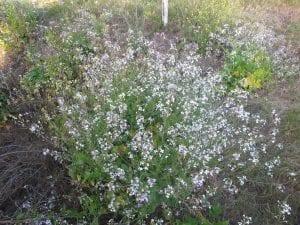 arbusto lleno de flores de color blanco
