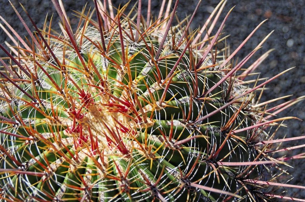 Los Ferocactus son cactus mexicanos