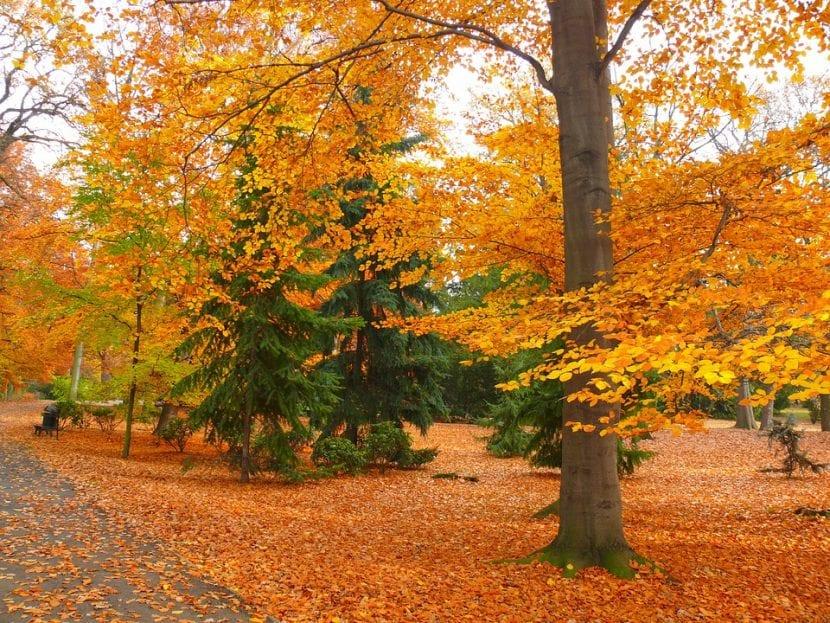 El jardín se puede ver precioso durante el otoño