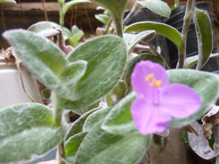 planta con hojas con un tipo de hilo blanco