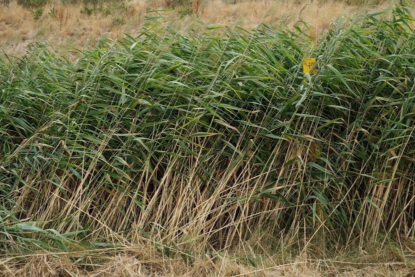 plantas acuaticas con tallo largo