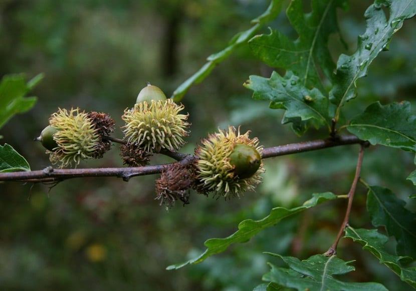 ramas de arbol con frutos