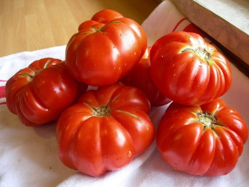 Caracacterísticas del tomate marmande