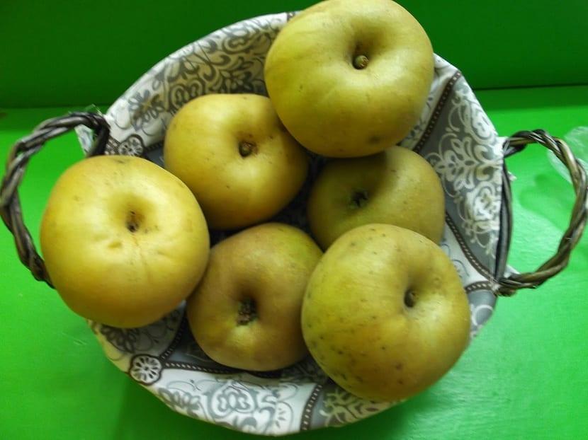 Variedad de manzana reineta