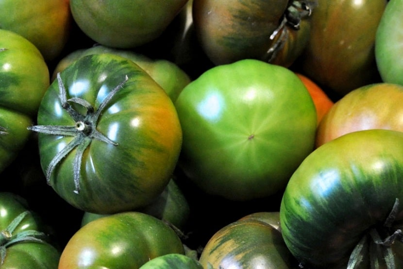 Variedad de tomate marmande
