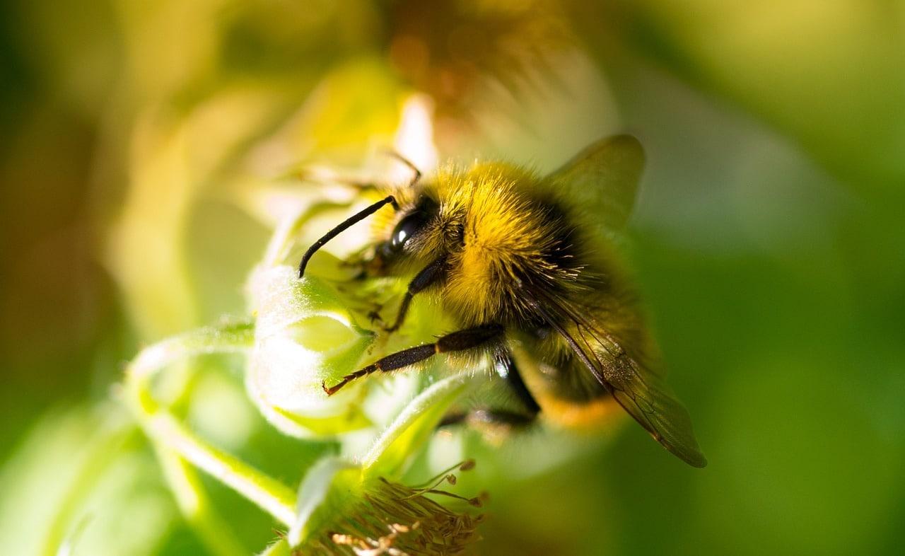 Atrae abejas a tu bosque