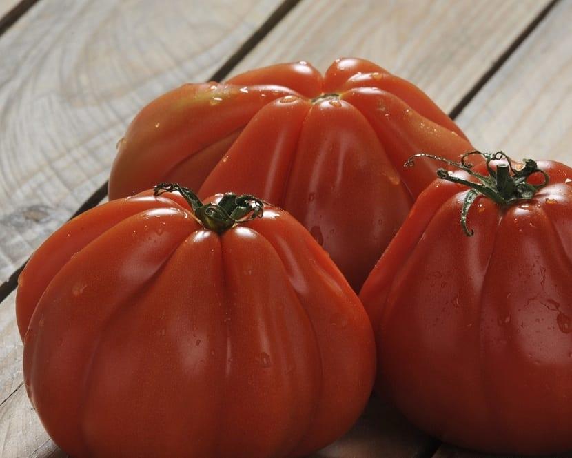 características del tomate