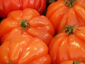 ejemplares de tomate corazón de buey